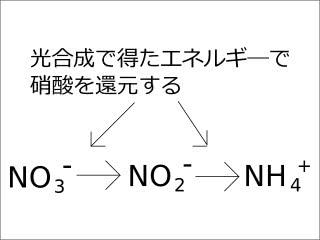 原生 アミノ酸 糖